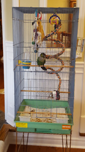Looking for a female Black Cap Conure free or reasonable price