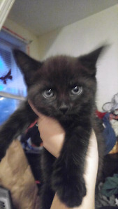 Kittens in need of their loving forever homes