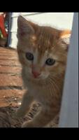 One beautiful kitten left