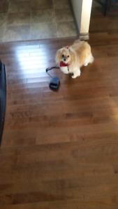 HOT DIGGITY DOG GROOMING