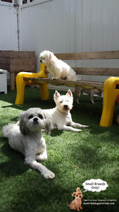 Playdates,sleepovers for small dogs in cage-free smoke-free home