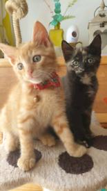 2 gorgeous kittens £200 need gone ASAP