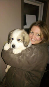 Great Pyrenees Livestock Guardian Puppies