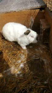 year old male bunnys