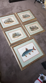 Job lot of fish wall pictures