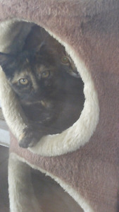 Tortise Shell and Tabby Kittens For A Good Home
