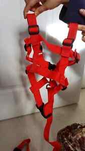 Child safety harness for toddler age 3 to 9 Cambridge Kitchener Area image 1