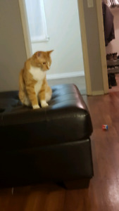 Missing cat ty please help north end regina