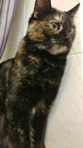 Missing Kitty - Vicky Crt/Eastern Passage Area