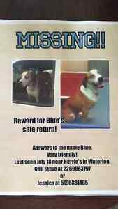 Lost my dog erb st st Agatha near the dumb on erb Kitchener / Waterloo Kitchener Area image 1