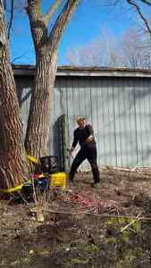 PROFESSIONAL TREE SERVICES/ALL SEASON TREE SPECIALISTS Kitchener / Waterloo Kitchener Area image 2