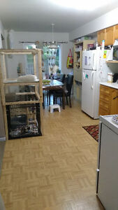 Female Roommate Wanted in a 2 BR Pet-Friendly Townhouse