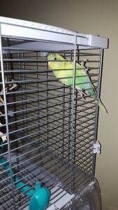 Cage pour perruche / Budgie cage (new) BIRD NOT INCLUDED
