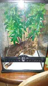 Male crested gecko and tank Cambridge Kitchener Area image 2