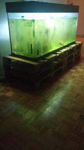 Aquarium 140 gallons