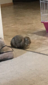 Free bunny to loving home