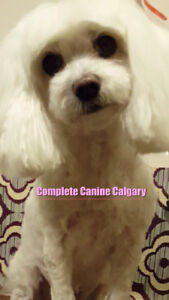 Professional Home Based Grooming @ Complete Canine Calgary