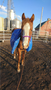 MUST SEE Yearling Filly