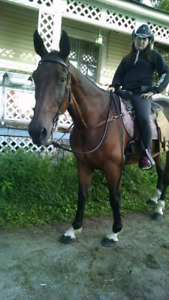 Jument standardbred pur sang