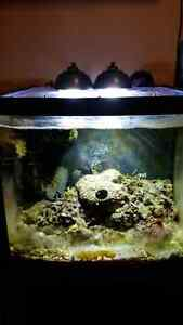 Used biocube with  full spectrum led and pump Windsor Region Ontario image 1
