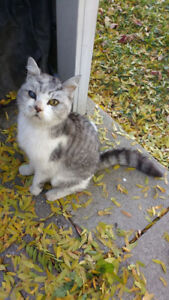 Found Missing Sweet older? cat