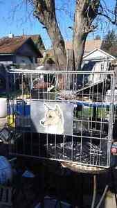 Dog cage $40 obo