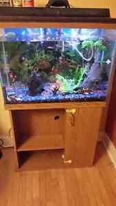 40 gal tall fish tank and stand