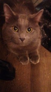 10 Month male cat for new home