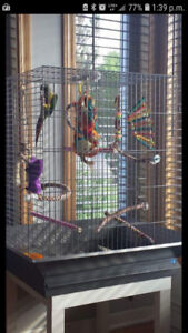 Cage à petit perroquet en parfait état