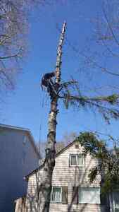 all moore tree service
