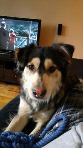 Urgent! Lost, injured dog!!!