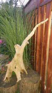 Large Drift Wood