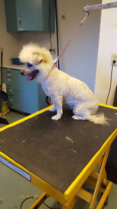 Mobile Pet Grooming Services In The Comfort Of Your Own Home Edmonton Edmonton Area image 5
