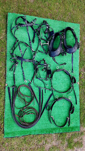 Pairs harness for miniature horses.