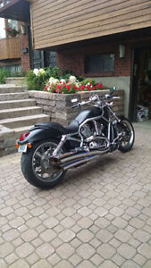 Harley Vrod lowboy fat bob