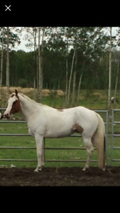 Variety of horses available