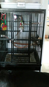 Breeding pair lovebirds with playtop parrot cage