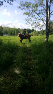 13 yr old  mare