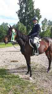 Riding Lessons.  Beginners Welcome! Kitchener / Waterloo Kitchener Area image 1