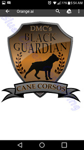 Registered AKC ICCF Cane Corso Pups