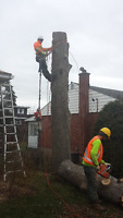** PRO TREE TRIMMING ** PRUNING - REMOVAL - FREE ESTIMATES