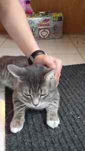 7 mnth old tabby