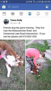 OVLPN - Lost dog in Griffith