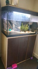 Fish tank full set with fish
