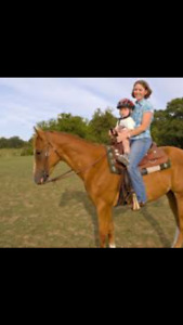 Looking for a quiet saddle broken horse