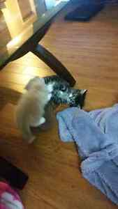 2 kittens and momma cat to a good home