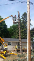 24/7 EMERGENCY TREE REMOVAL and regular tree removal