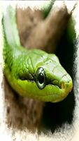 Taking in any unwanted reptiles and reptile accessories