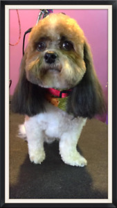 Looking to hire professional dog groomer-Strathmore AB