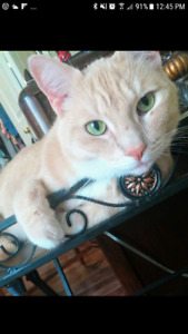"""Lost Orange Cat- Answers to """"Gibson"""""""